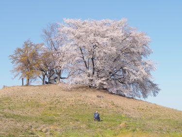 春といえばお花見!群馬県内オススメ桜の名所