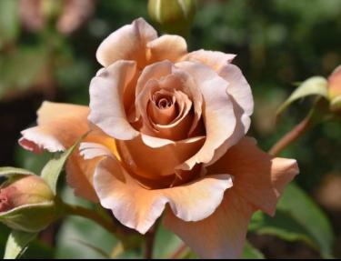 【群馬県】春のバラを見に行こう!本当は教えたくない穴場もあり